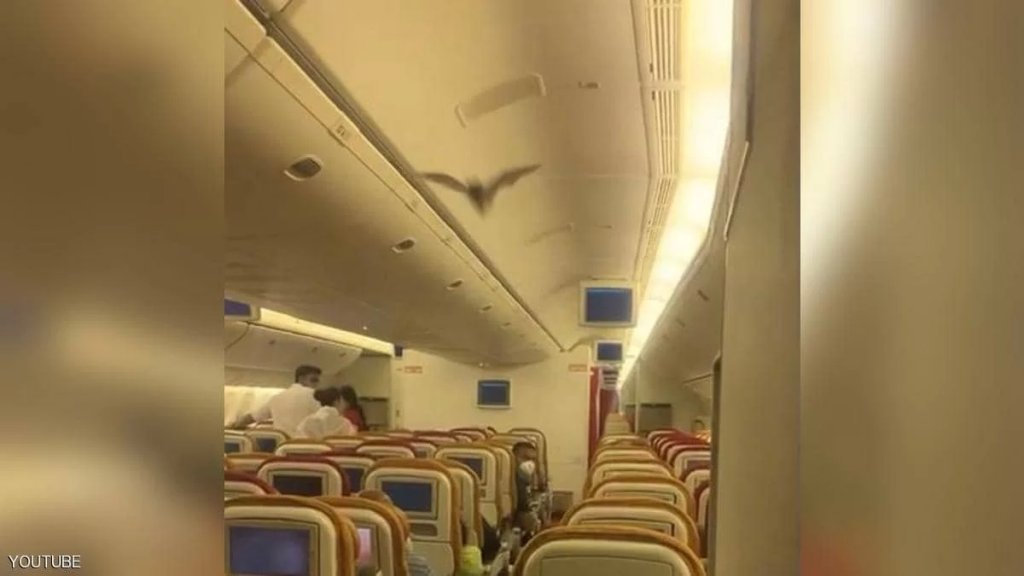 """بالفيديو/ """"خفاش"""" يجبر طائرة هندية كانت متجهة الى الولايات المتحدة على العودة... """"الذعر انتاب الركاب"""""""