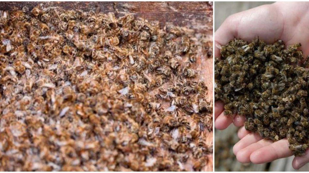 بسبب الرش الجائر للمبيدات الزراعية... نفوق أعداد هائلة من النحل في بلدة رحبة العكارية