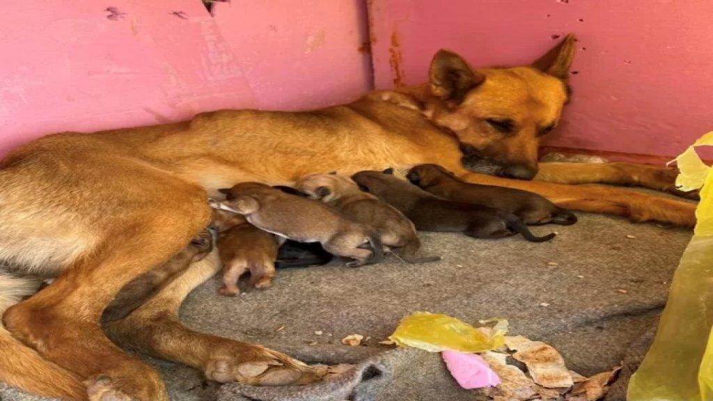 يضعون السم في فضلات الطعام... طبيب بيطري كشف عن نفوق كلاب شاردة أليفة في بلدات عكارية!