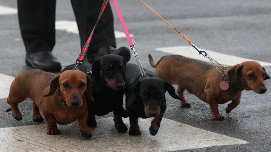 على خلفية مخاوف من داء الكلب... الولايات المتحدة تحظر استيراد الكلاب من 113 دولة بينها لبنان!