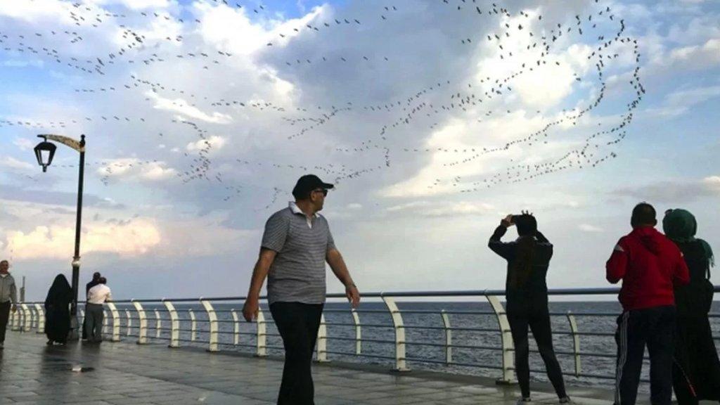 ضيف جديد في سماء بيروت.. أسراب من طيور الغربان تحلّق باستمرار عند الكورنيش وبين الأبنية بعد الحظر