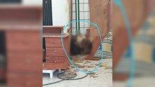 قتله وأخفى جثّته لمدة عام تقريبًا داخل برّاد أحد المستودعات في بلدة درب السيم.. شعبة المعلومات كشفت هويّته وأوقفته