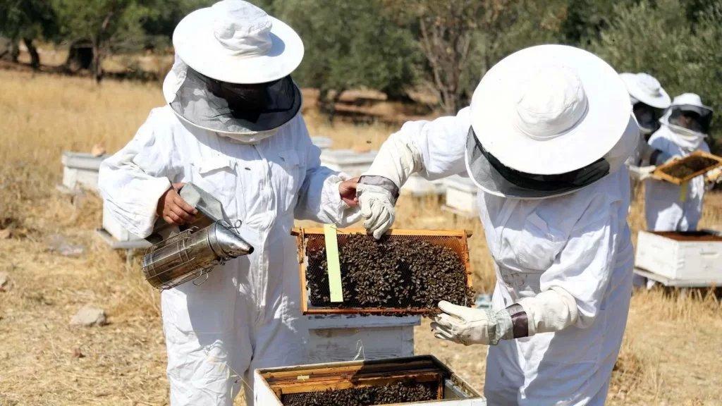 تعميم هام للمزارعين ومربي الماشية والنحل في بنت جبيل