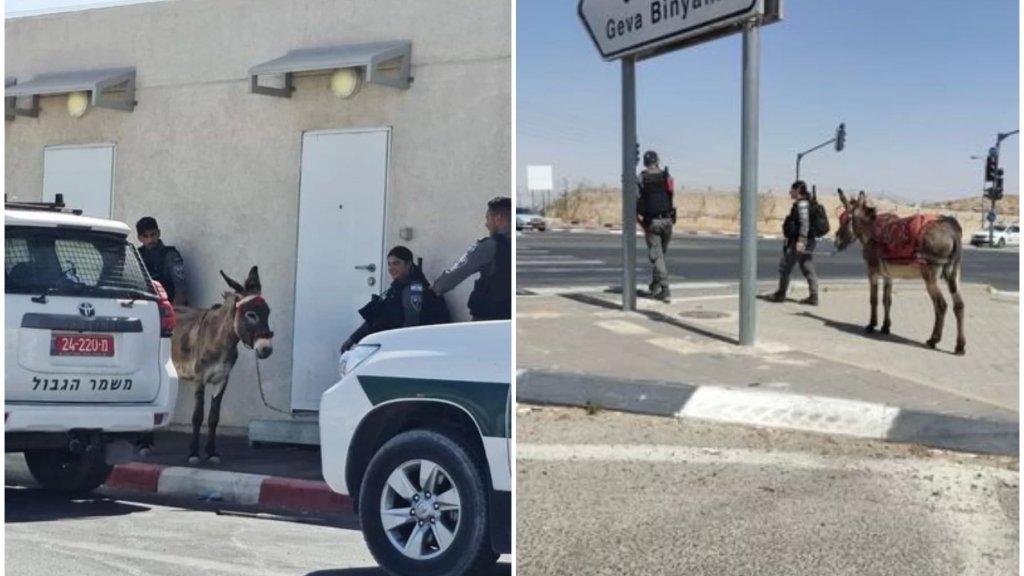 """بالصور/ جنود """"إسرائيليون"""" """"اعتقلوا"""" حمارا في قرية جبل المكبر بمدينة القدس"""