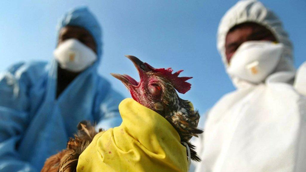 """الصين.. إقليم سيتشوان يسجل إصابة بشرية بسلالة """"إتش 5 إن 6"""" من إنفلونزا الطيور"""