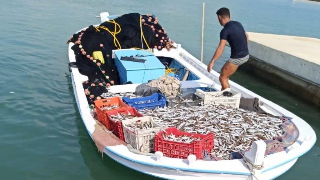 """مصادرة طنين من سمك المليفة جنوباً بعد صيدها خلافاً للقانون... """"تم توزيعها على جمعيات تعنى برعاية الأيتام والمسنين في صيدا والجوار"""""""