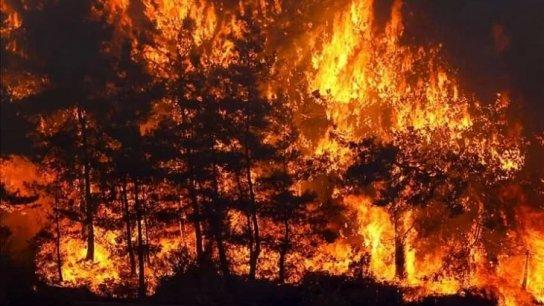 إسطنبول تحظر دخول الغابات طيلة آب.. تُمنع كافة رحلات التنزه في الغابات وإيقاد النيران للشواء