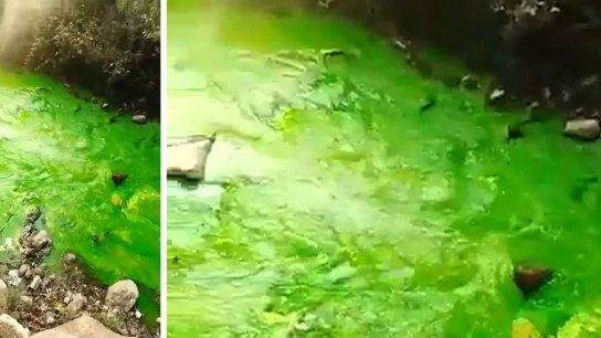 بالفيديو/ نهر عيون السمك تحوّل لونه إلى الأخضر ليتبين أنها مادة أضيفت بهدف إعداد دراسة عن المياه الجوفية