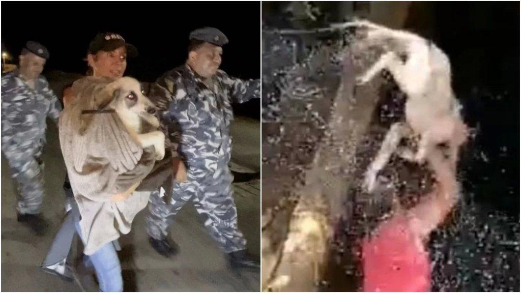 بعد فيديو الوحش البشري الذي عذّب كلبًا في تلعباس - عكار.. ناشطون بالتعاون مع الأمن الداخلي تمكنوا من إنقاذ الكلب!