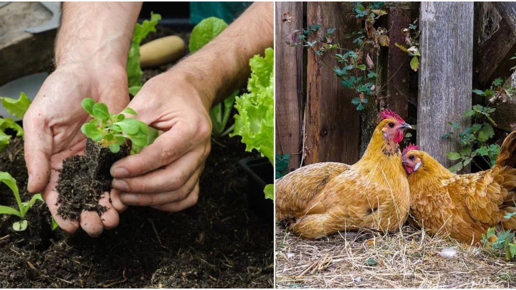 عسكريون يزرعون الخضراوات ويربون الدواجن قرب مراكزهم في البقاع لتوفير كفايتهم من الغذاء! (الشرق الأوسط)
