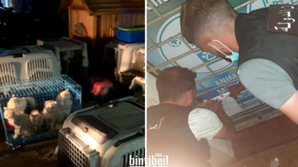 """بالصور/ إنقاذ 50 قطًا وكلبًا من متجر للحيوانات الأليفة في برعشيت بعدما ختم أمن الدولة المتجر """"المخالف"""" بالشمع الأحمر"""