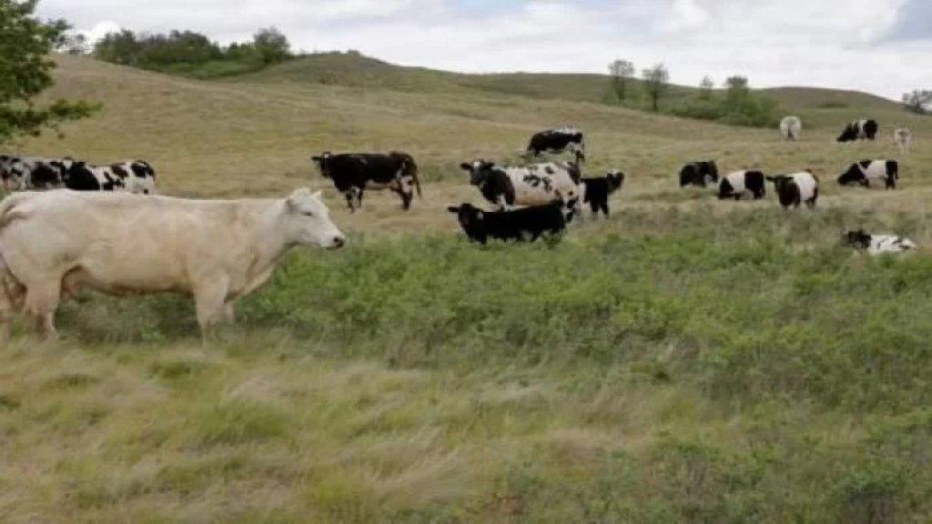 بعد رصدها إصابتين بجنون البقر.. البرازيل توقف تصدير اللحوم إلى الصين