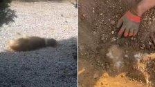 بالفيديو/ ناشطة تنشر.. مجزرة كلاب تم قتلهم ودفنهم في محيط حرم الجامعة اللبنانية في الحدت!