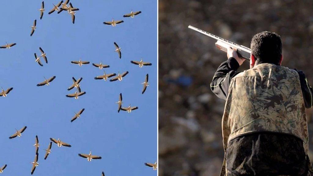 """""""بلد بلا طير ما فيها خير"""".. أزمات لبنان أنقذت الطيور من مجازر """"القواص"""" المُخالفة ونكبت الصيادين!"""