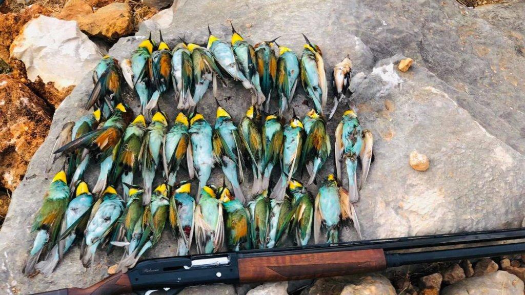 تزامنًا مع قرار وزارة البيئة بعدم فتح موسم الصيد.. مجزرة طالت سرب من طيور الوروار في إحدى المناطق اللبنانية
