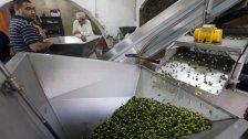 زيت الزيتون للقادرين فقط.. ومخاوف جديّة من أن يغزو زيت الزيتون «المضروب» والمهرّب السوق