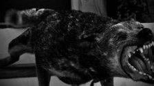 مسلسل الرعب من الحيوانات المفترسة متواصل.. مواطن من بنت جبيل يتعرض لهجوم من حيوان مفترس و ينجو منه بأعجوبة!