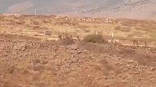 قوات الاحتلال تخطف قاصرا كان يرعى الماشية قبالة متنزهات الوزاني وإقتادته الى الداخل المحتل